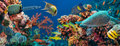 Colorful underwater reef with coral and sponges offshore rocky small tropical fish swimming by in a blue ocean Royalty Free Stock Photos