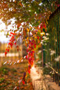 Colorful vegetation in Autumn season Royalty Free Stock Photo