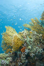 A colorful and vibrant tropical coral reef scene. Stock Image