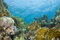A colorful  and vibrant tropical reef scene. Royalty Free Stock Photo
