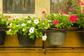Colorful vinca flower in pots a wooden window box filled with pink and white Royalty Free Stock Photography