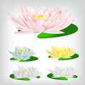 A colorful water lilies set of Royalty Free Stock Photo
