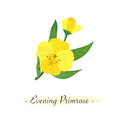 Colorful watercolor texture vector botanic garden flower yellow