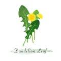 A Colorful watercolor texture vector healthy vegetable dandelion l