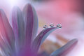 Colorful waterdrops flower with pink on background Stock Photo