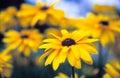 Salvaje flores