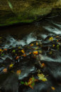 Colorful wild stream with leaves in autumn photo was taken in national park bohemian switzerland Stock Photography