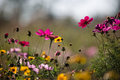 Colorful wildflowers on the meadow in summer Royalty Free Stock Photo