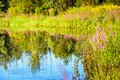 Colorful wildflowers reflected in the water surface of a fen Royalty Free Stock Photo