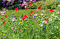 Colorful wildflowers on the summer meadow Royalty Free Stock Photo