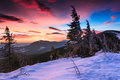 Colorful winter morning in the mountains. Dramatic overcast sky.View of snow-covered conifer trees  at sunrise. Merry Christmas's Royalty Free Stock Photo