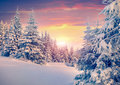 Colorful winter sunrise in mountain forest. Royalty Free Stock Photo