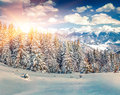 Colorful winter sunrise in the mountain forest. Royalty Free Stock Photo