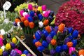 Colorful Wooden tulips Singel Bloemenmarkt Holland Royalty Free Stock Photo
