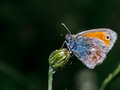 Colorfull butterfly on top of a plant with dark background Royalty Free Stock Photo