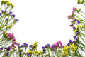 Colorfull wildflowers on white background, bottom border. Flat lay, top view. Royalty Free Stock Photo