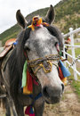 Colorfully Dressed Tibetan Horse Royalty Free Stock Photography