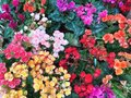 Colorfully flower Royalty Free Stock Photo