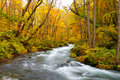 Colori di autunno del fiume di Oirase Immagini Stock Libere da Diritti