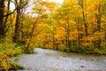 Colori di autunno del fiume di Oirase Immagini Stock
