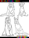 Coloring book black white cartoon illustration cute purebred dogs Royalty Free Stock Image