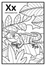 Coloring book, colorless alphabet. Letter X, xenosaurus