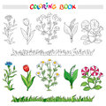 Coloring book with flower set . Vector illustration. Royalty Free Stock Photo