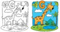 Coloring book of giraffe. Alphabet G