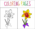 Coloring book page, flower, iris. Sketch and color version. Coloring for kids. Vector illustration
