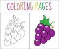Coloring book page. Grapes. Sketch and color version. Coloring for kids. Vector illustration