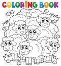 Sfarbenie kniha ovce tému 2