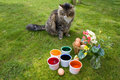 Coloring Eggs - Cat Watching Royalty Free Stock Photo