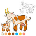 Coloring page. Color me: goat. Mother goat with her baby. Royalty Free Stock Photo