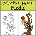 Coloring Pages: Birds. Cute beautiful hoopoe on the tree branch Royalty Free Stock Photo