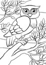 Coloring pages. Birds. Cute owl. Royalty Free Stock Photo