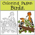 Coloring Pages: Birds. Two cute beautiful hoopoes Royalty Free Stock Photo