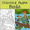 Coloring Pages: Birds. Two cute beautiful hoopoes smile Royalty Free Stock Photo