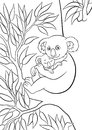 Coloring pages. Mother koala with her little cute sleeping baby sits on the tree. Royalty Free Stock Photo