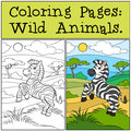 Coloring Pages: Wild Animals. Little cute zebra.