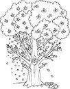 Coloring season tree four seasons digital illustration for little children Royalty Free Stock Image