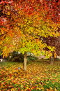 Colors of autumn the beauty Stock Photos