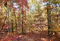 Colors of autumn or fall in forest Royalty Free Stock Photography