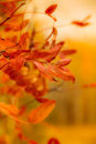 Colors of autumn golden early Royalty Free Stock Photo
