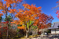 Colors of autumn leaves in Japanese garden. Japan.