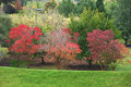 Colors of autumn vibrant in the australian park Stock Images