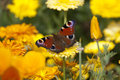 The colors of summer сolorful butterfly Stock Images