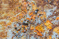 Colors and surface texture of rusty metal stock photo Royalty Free Stock Photo