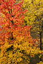 Colors of tree and leaves in autumn Royalty Free Stock Images