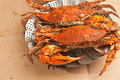 Colossal, steamed and seasoned chesapeake blue claw crabs on a brown paper table cover Royalty Free Stock Photo