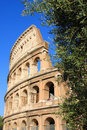 Colosseum and olive tree